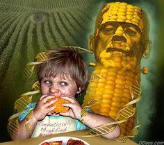 C'est confirmé : L'ADN des cultures génétiquement modifiées est transféré aux humains qui les mangent