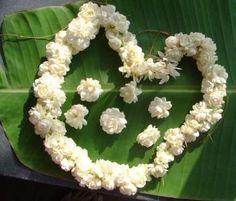 Jasmin flower garlands Jasmin Flower, Wedding Plates, Hawaiian Flowers, Flower Garlands, Leis, Blooming Flowers, Colorful Flowers, Wedding Jewelry, Flower Arrangements
