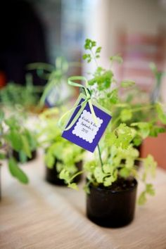 """Could do something like this. For guests to have a kitchen herb plant - and use a stick with the saying """"May the Love Grow"""" Potted herbs for centerpieces Camp Wedding, Green Wedding, Wedding Favors, Our Wedding, Wedding Flowers, Wedding Stuff, Party Favors, Wedding Ideas, Potted Plant Centerpieces"""