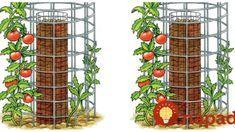 Organic Gardening For Dummies Gardening For Dummies, Vegetable Garden Design, Small Gardens, Bird Feeders, Organic Gardening, Diy And Crafts, Flora, Home And Garden, Wall Decor