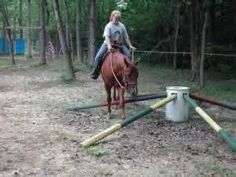 horse training obstacles - Yahoo Image Search Results
