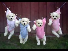 FUNNY DOG VIDDEOS | NEW THE BEST FUNNY DOG VIDEOS FOR CHILDREN 2015 PART 2