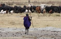 Tanzanian Land Grab Threatens Maasai Way of Life Indigenous Media, Big Cat Diary, Serengeti National Park, Thing 1, Game Reserve, Way Of Life, Pictures Of You, People Around The World
