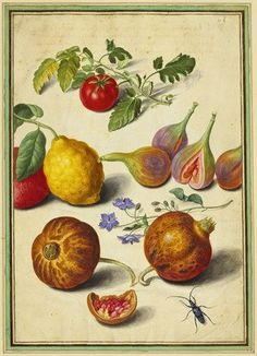 A tomato, lemon, pomegranates and borage with flies and a beetle