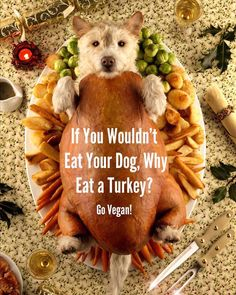 Around 46 million turkeys are killed and eaten during #Thanksgiving alone. Please make a kinder choice: choose #vegan