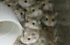 20 Pictures Of Adorable Tiny Little Hamsters You Just Can't Ignore | Thought Catalog