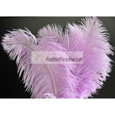 Lavender/Lilac Ostrich Feathers 100 Pieces inch Wholesale Dozens Bulks wedding Centerpieces Crafts arts DIY Events and Stage Performance Decorations Lilac Color, Purple Teal, Ostrich Feather Centerpieces, Eiffel Tower Vases, Lilac Wedding, Pink Themes, Wedding Centerpieces, Wedding Decorations, Ostrich Feathers