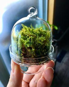 Isn't this little thing terrarium so cute?!