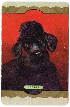 Vintage Coles Swap Card Exclusive Coles Production Poodle $7