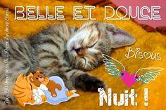 Belle et douce nuit ! Good Morning Good Night, Messages, Cats, Animals, Communication, Smileys, Scrapbooking, Illustration, Photos