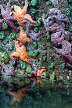Bandon Seastars near Bandon Oregon