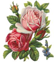 Blog PNG-Free : Flores