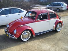 vw bugs | 1969 Volkswagen Beetle, Kirby on Christmas Day...This was a present ...