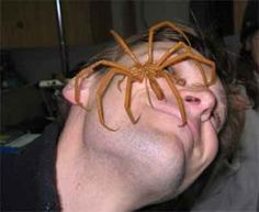 ugly spiders pictures | Big, Freaking, Ugly, Hairy Spider Thread. - Christian Guitar Forum