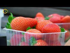 Huelva fresas  reportaje y vídeo de la 1 sobre Manuel Carrasco, embajador de la campaña 'Fresas de Europa' Promocionando nuestra Huelva y nuestros productos Dale a me gusta a mi pagina y comparte.  https://goo.gl/7ZZbaJ