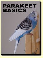 parakeet care ebook - read this for information on parakeet care before you purchase!