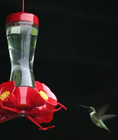 DIY - How To Make Your Garden a Hummingbird Haven! My Father had a Hummingbird feeder just like this one. Outdoor Projects, Garden Projects, Garden Ideas, Outdoor Ideas, Gardening Gloves, Gardening Tips, Hummingbird Garden, Hummingbird Food, Gardens