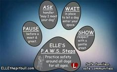 Greeting dogs respectfully can reduce the chance of a dog bite. Remember to PAWS - Pause, Ask, Wait, Show. Farm Dogs, Dog Safety, Cute Dogs, Awesome Dogs, Dog Training Tips, Best Self, Dog Care, Dog Treats, Love Of My Life