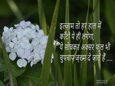Hindi Qoutes, Shayari In Hindi, Quotations, Golden Leaves, Dil Se, True Facts, God, Quotes, Life