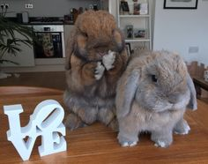 These spectacularly fluffy bunnies. | 18 Cute Animals Who Will Help Take Your Mind Off Things
