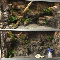 Modern & Unique Reptile Terrarium Ideas - My site Terrariums Gecko, Decor Terrarium, Lizard Terrarium, Terrarium Stand, Reptile House, Reptile Room, Reptile Cage, Vivarium, Gecko Habitat