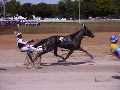 The pacer, Bus Fare, driven by Jimmy Smith competes in the division of Tri-City Pace at the 2012 Wayne County Fair in Wooster, Ohio. Race Horses, Horse Racing, Wooster Ohio, Jimmy Smith, Standardbred Horse, The Pacer, Wayne County, Tri Cities