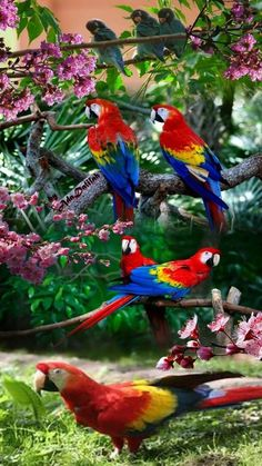 Pretty Birds, Beautiful Birds, Animals Beautiful, Parrot Pet, Parrot Toys, Colorful Parrots, Colorful Birds, Animals And Pets, Cute Animals