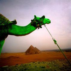 The Pyramids, Giza, Egypt, by Chip Simons