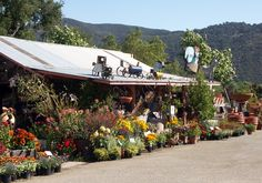 garden center display - Google Search - don't forget the HUMOR! What fun!
