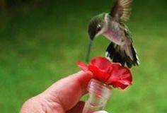 How to Make a Bird Feeder | DIY Bird Feeder - Birds & Blooms