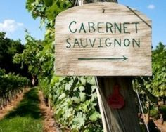 Cabernet Sauvignon this way
