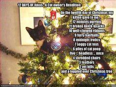cats in the xmas tree....