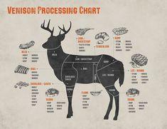Venison Deer, Venison Steak, Deer Meat, Canned Venison, Venison Backstrap, Venison Tenderloin, Deer Backstrap Recipes, Roast Brisket, Pork Roast
