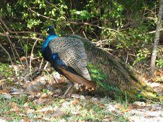 louisiana national parks photos | louisiana state parks historic sites audubon state historic site