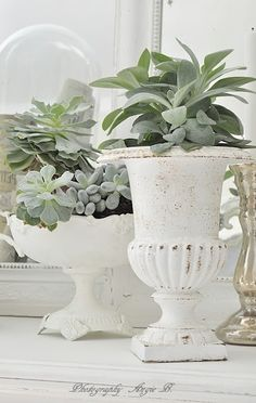 ciao! newport beach: decorating with succulents Deco Floral, Arte Floral, Indoor Plants, Potted Plants, Shabby Chic Decor, Succulents In Containers, Succulents Garden, Large Containers, Succulent Plants