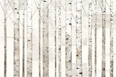Birch Trees on White Prints by Avery Tillmon at AllPosters.com