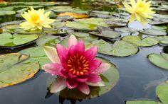 flores el paraiso en la tierra