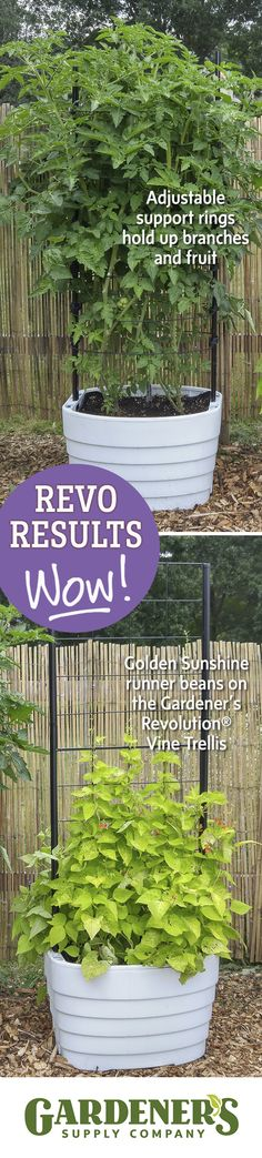 We just had to show you some of the test garden results with Gardener's Revolution Classic Tomato and Vine Planters. Wow, right?