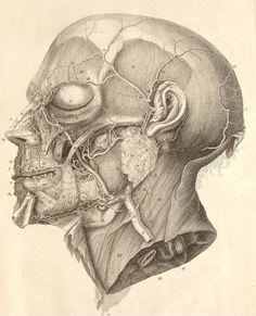 New medical anatomy art drawings 29 Ideas Body Anatomy, Anatomy Drawing, Anatomy Art, Human Anatomy, Medical Drawings, Medical Art, Medical Science, Medical History, Sports Drawings