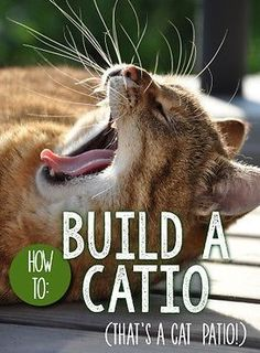 We can all agree that our pet cats are safest when kept strictly indoors, but wouldn't you love to let your kitty enjoy the fresh air of the outdoors, while still being protected from predators? Catios - or, cat patios - are the latest craze among cat parents. And, it turns out, you can create a catio for your feline friend that fits your living situation - and your budget!