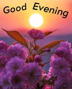 Good Evening Love, Good Evening Photos, Good Evening Messages, Good Evening Wishes, Good Evening Greetings, Evening Pictures, Cute Good Night, Good Night Wishes, Romantic Evening