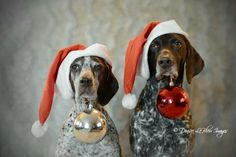 want to do this with Hagen for a Christmas card