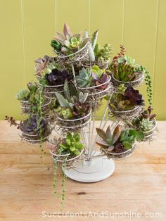 Succulents in a cupcake stand! http://www.succulentsandsunshine.com/succulents-in-a-cupcake-stand/