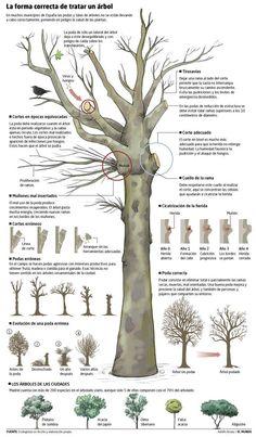 Poda árboles…