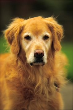 woof-- my beautiful doggie
