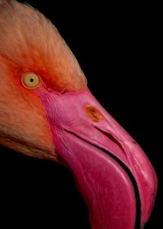 flamingo - How stunning is this?