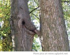nice Funny trees