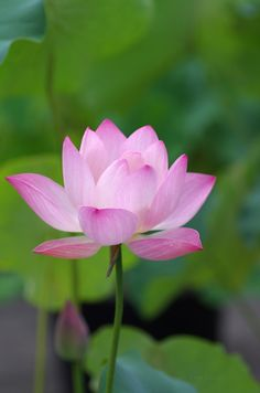 sideview of lotus flower sculpture pinterest lotus flower