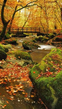 I would love to have a bridge over a creek on our property. Autumn trees and moss. So pretty.