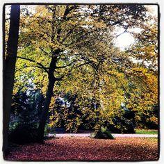 Julianapark Park Utrecht in de Herfst